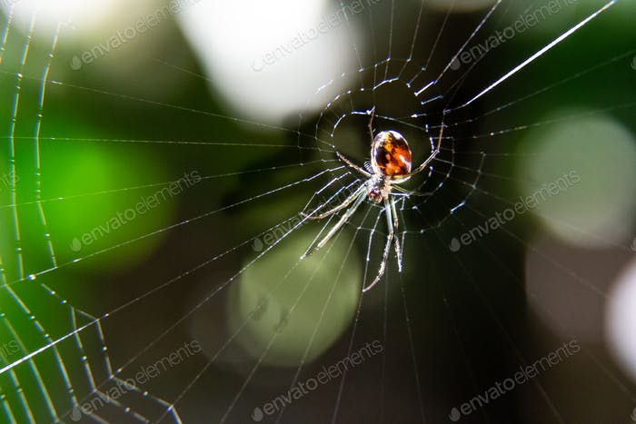 Macro shot of spider on center of web in the woods against sunlight.