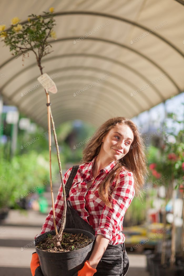 Gardener woman in a garden center carrying small potted tree
