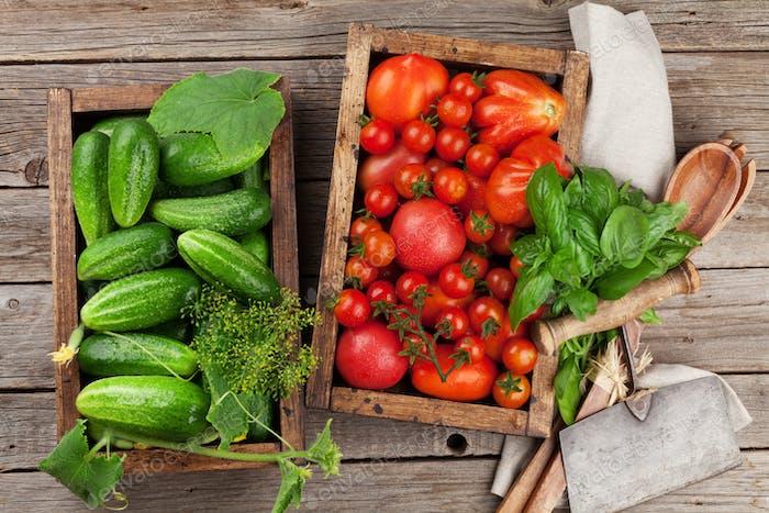 Fresh garden tomatoes and cucumbers