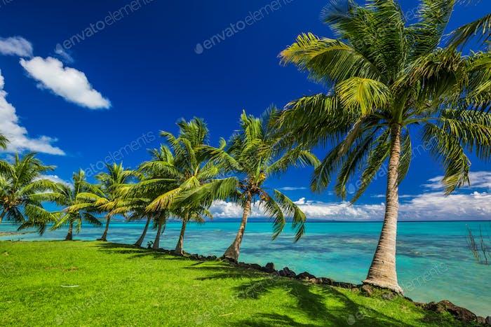 Tropical beach on north side of Samoa Island with palm trees