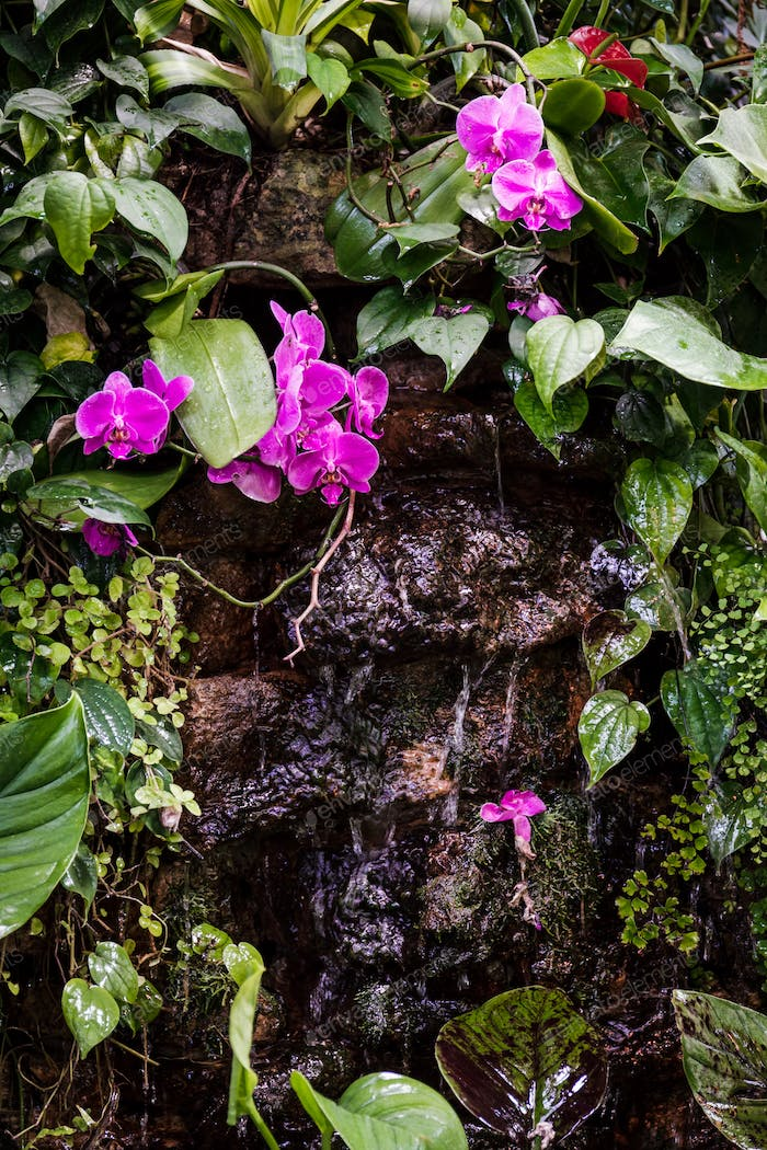 Decorative waterfall with tropical plants and a pink orchid in a greenhouse.