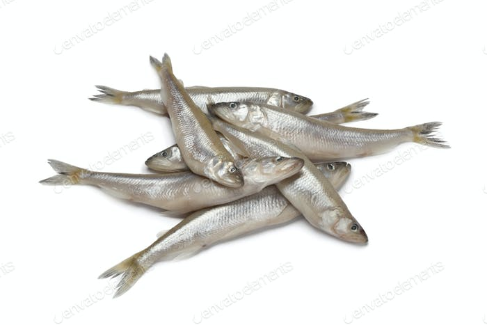 Fresh European smelt fishes