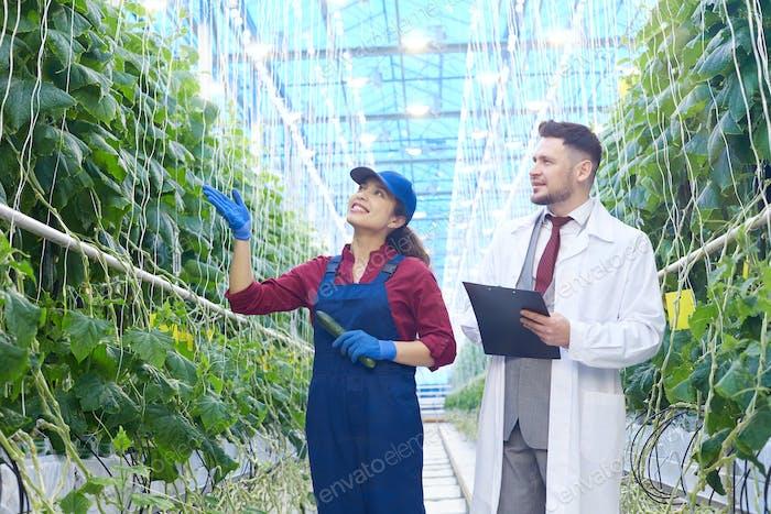 Scientist Examining Vegetables in Greenhouse