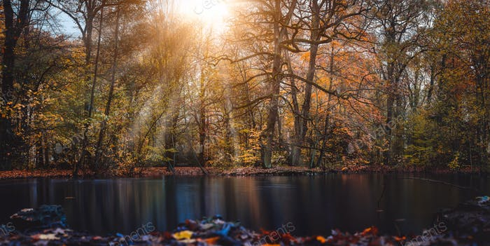 Autumn sun rays sunbeam appear trought the beautiful tree branches and leaves in a city park with a