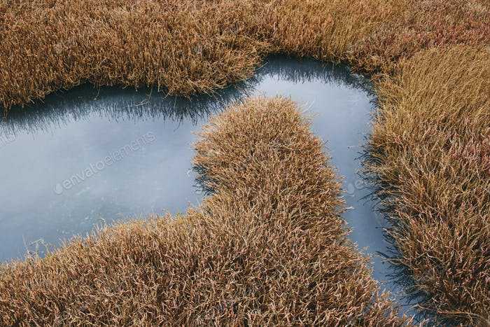 Intertidal pool of standing water with marsh grasses, dusk, Drakes Estero, Pt. Reyes National