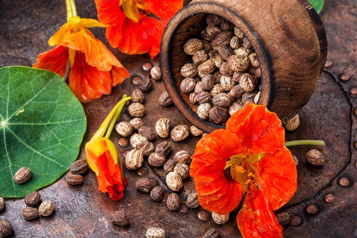 Seeds, and flowers of nasturtium