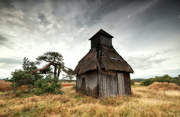 old wooden hut and pine tree on meadow