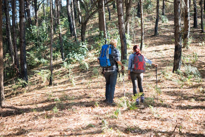 Hiking Couple backpacker in the pine forest.