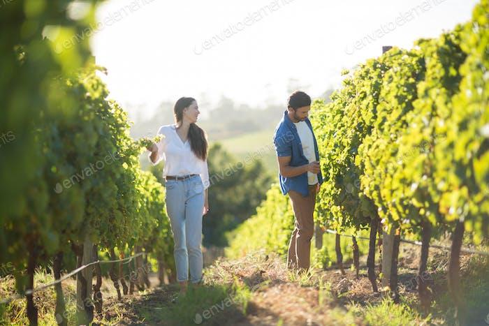Mann und Frau stehen bei Pflanzen im Weinberg