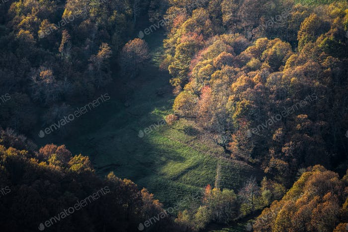 Vibrant Autumn Colors adorn the Forests and Meadows