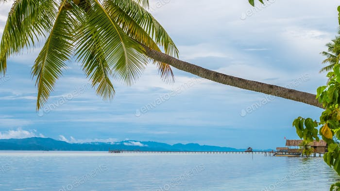 Coconat Palm on Kri Island, Homestay and Pier in Background. Raja Ampat, Indonesia, West Papua