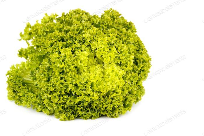 Green salad isolated