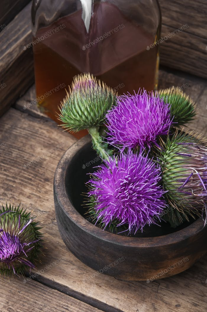 Thumbnail for Beautiful milk thistle flower