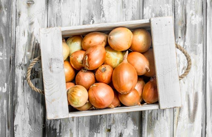 Fresh onions in the box.