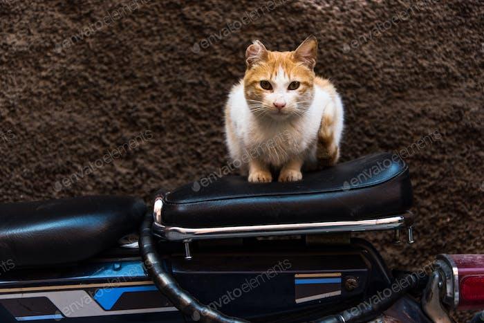 Cat sitting on bike in backstreet
