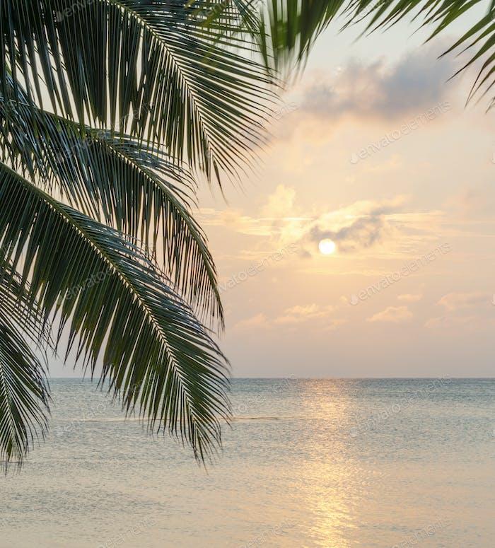 Caribbean Sunrise Palms