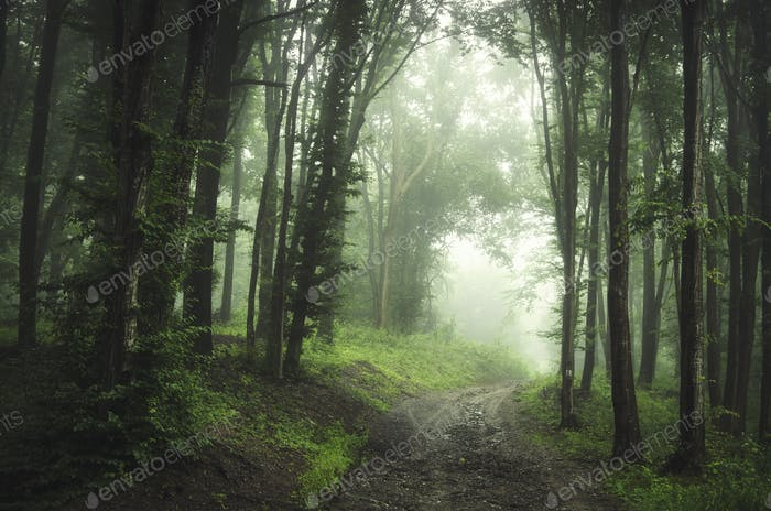 Road through green forest road with trees in fog
