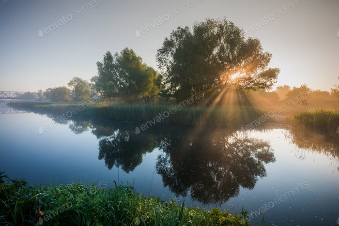 Beautiful foggy spring dawn on river with trees