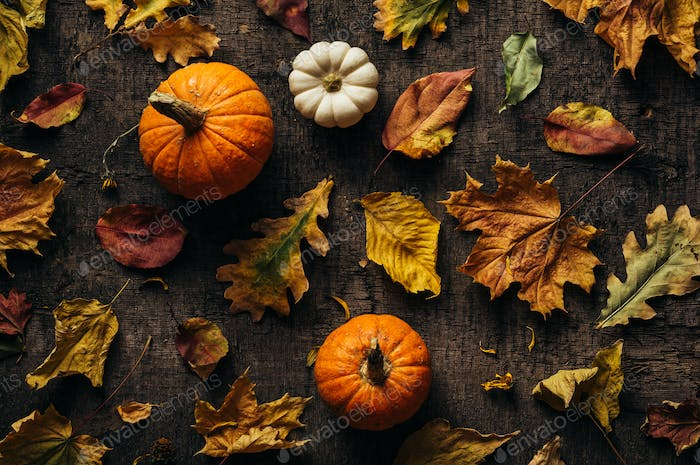 Different autumn leaves and pumpkin