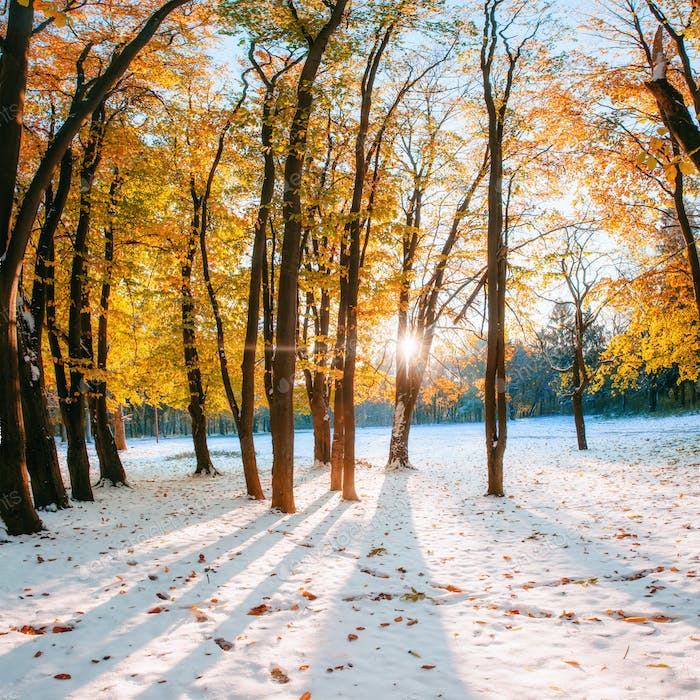 October mountain beech forest with first winter