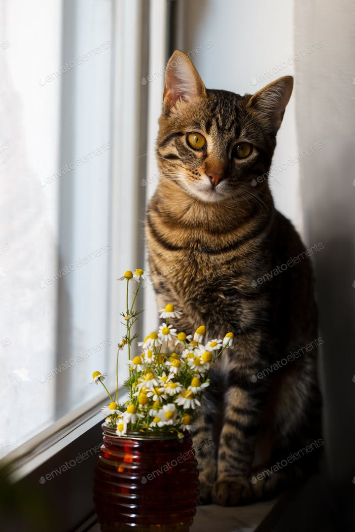 Little Bengal cat with daisy