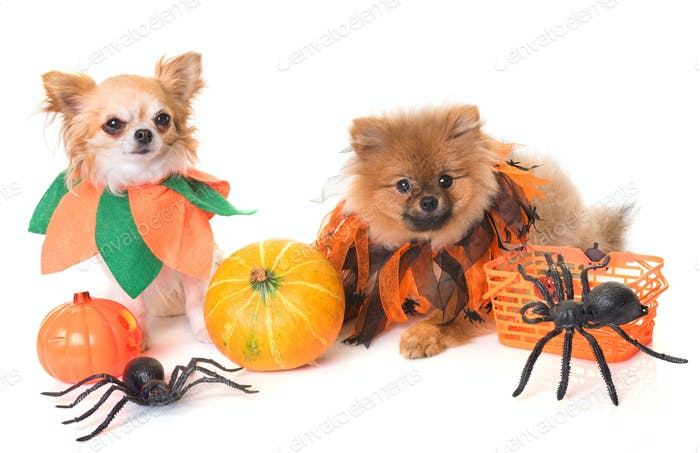 dogs and halloween