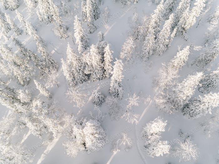 Зимний лес с морозными деревьями, вид с воздуха. Финляндия