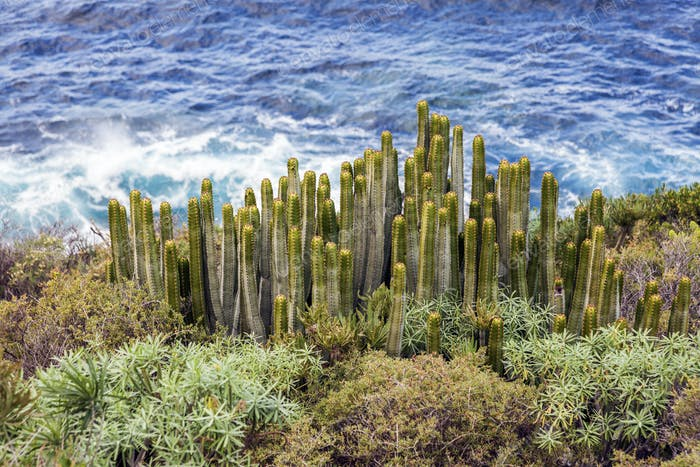 Cacti and Atlantic Ocean