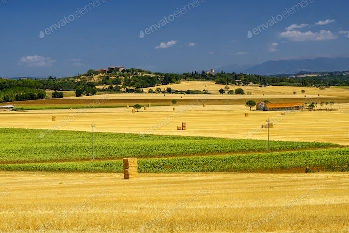 Summer landscape near Perugia
