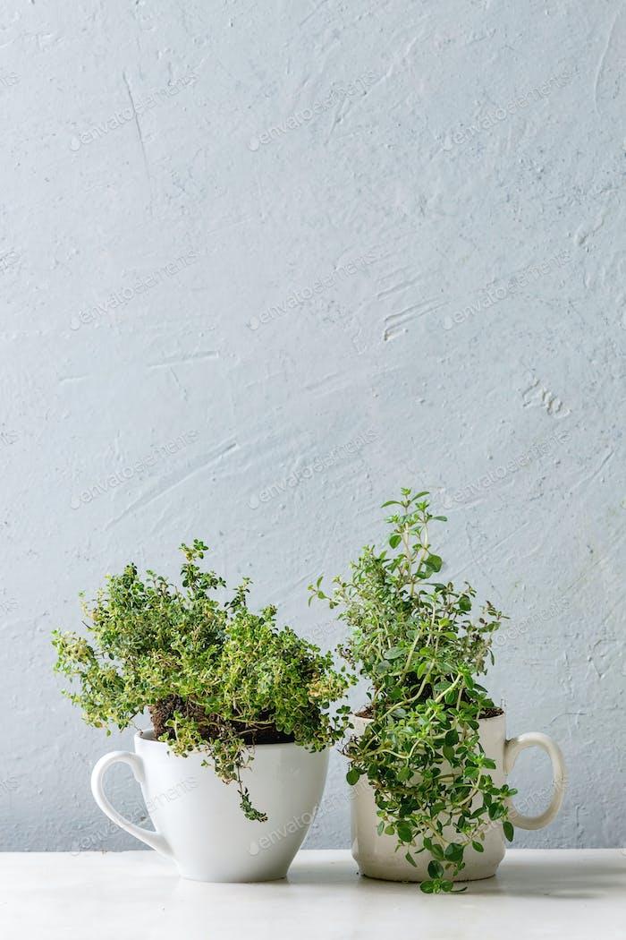 Kitchen gardening greens