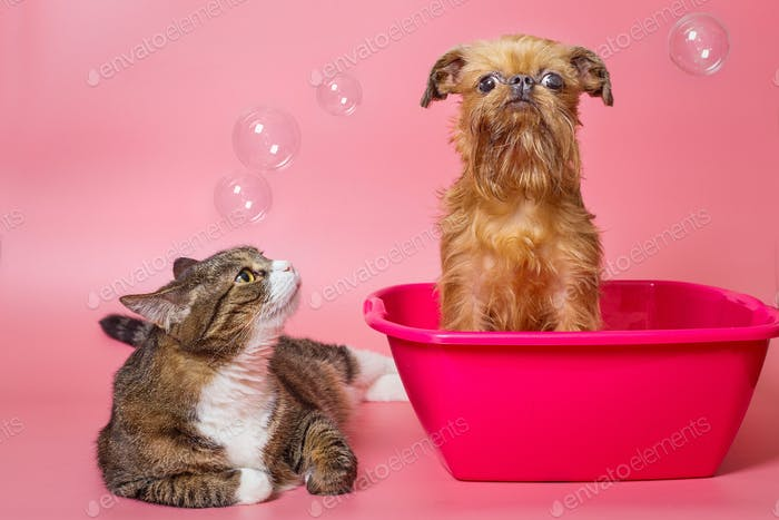 Dog and cat wash in a pink basin