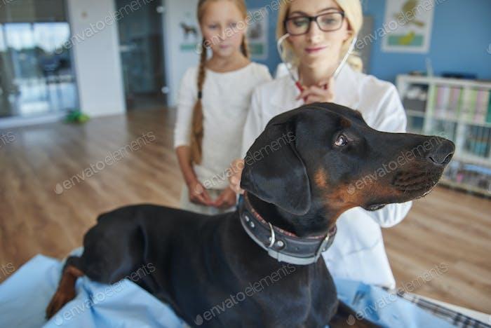 Girl with doberman at a vet