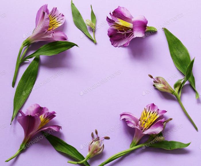 Alstroemeria Blumen