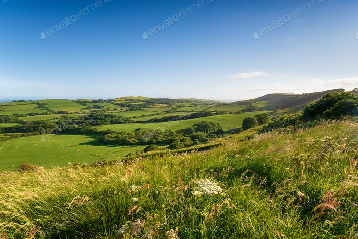 Summer in the Dorset countryside