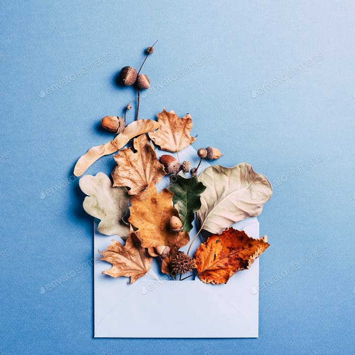Dry Leaves in Blue Envelope.