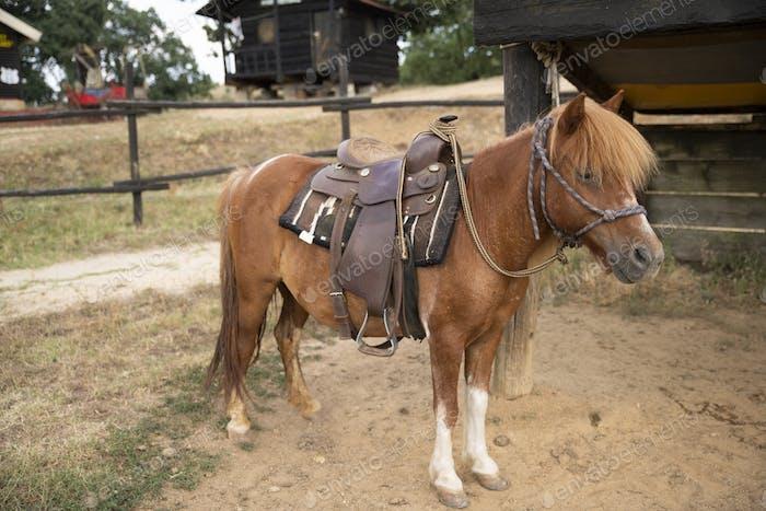 Beautiful Pony Stand in a Wild West Farm