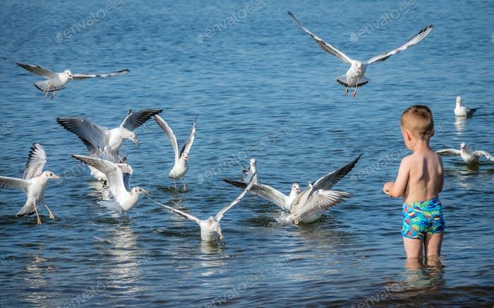 Little caucasian boy feeding seagulls