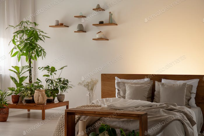 Pillows and blanket on wooden bed in bedroom interior with plant