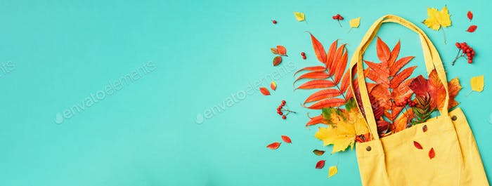 Autumn flat lay composition. Dry maple autumn leaves in blue shopping bag on yellow background. Top