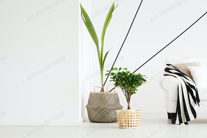 Plants in room