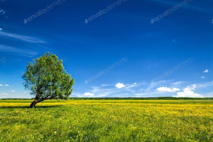 Green field scenery lanscape with single tree