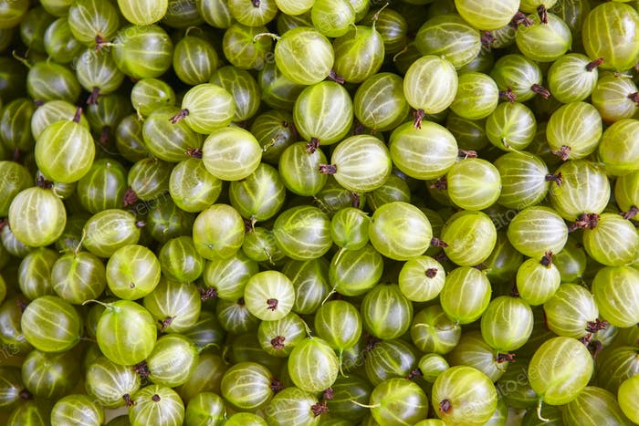 Green grapes detail. Healthy food background. Finland