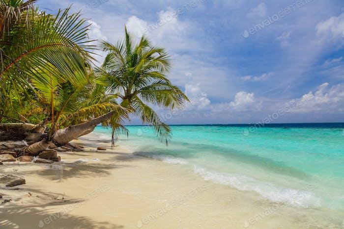 Biegepalme am tropischen Strand - Urlaubshintergrund