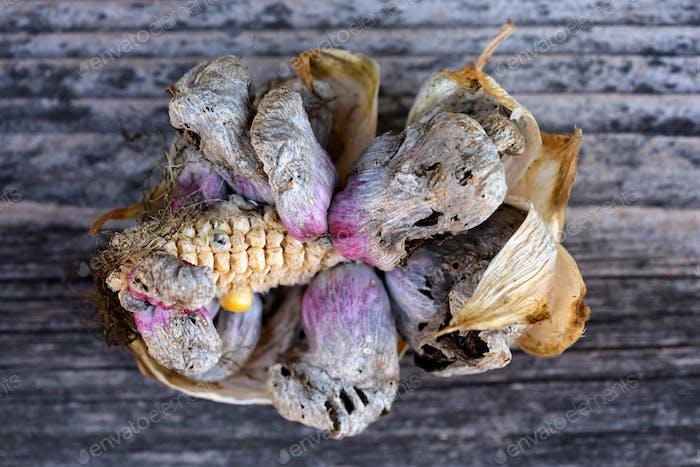 Corn smut (Ustilago zeae Unger). Ustilago maydis disease on corn