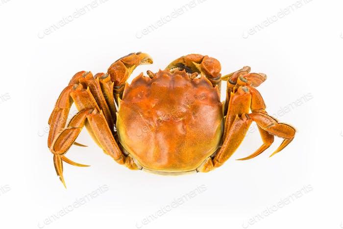 gekochte Krabbe Nahaufnahme