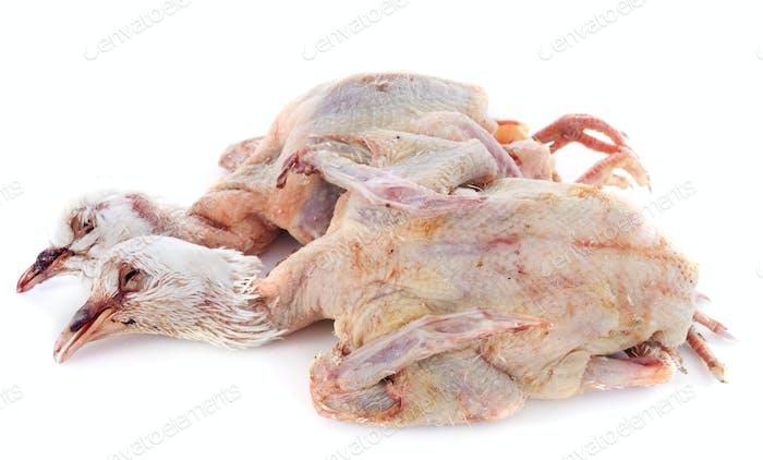 Taubenfleisch