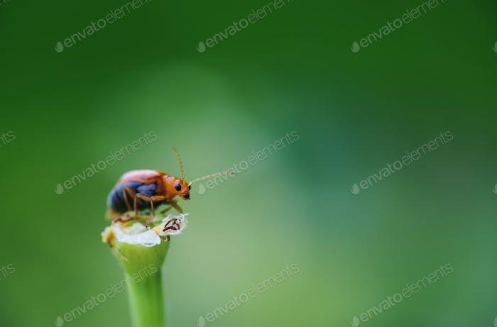 Un pequeño insecto naranja en una flor