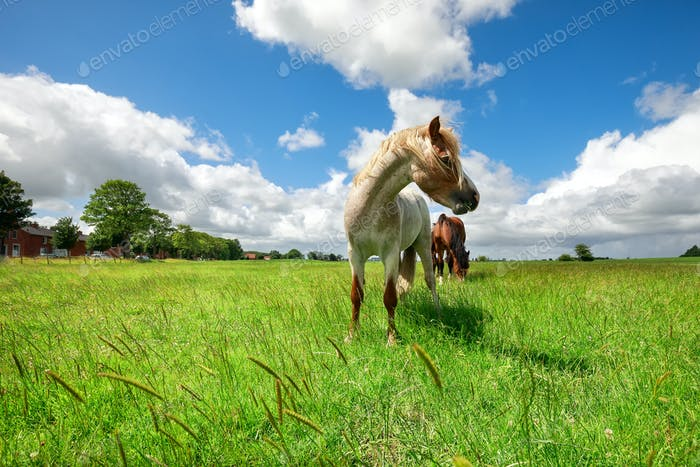 horse on green pasture over blue sky
