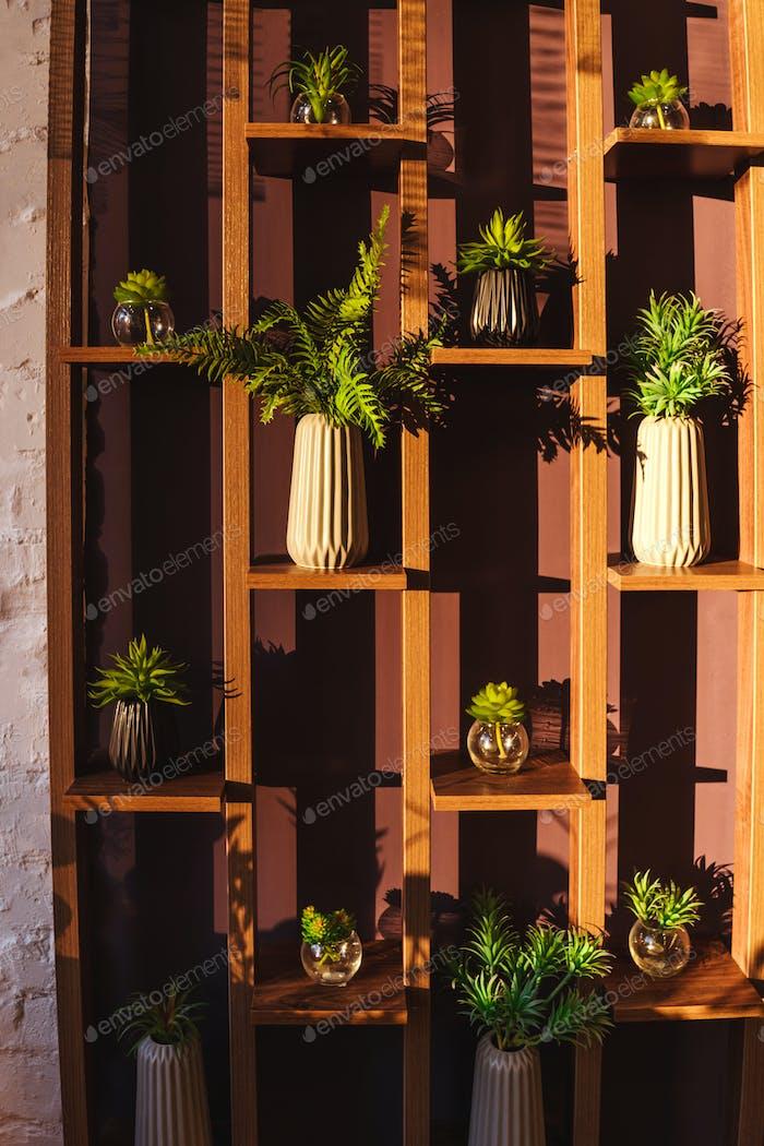 Zimmerpflanzen stehen auf Regalen, grüne Wand.