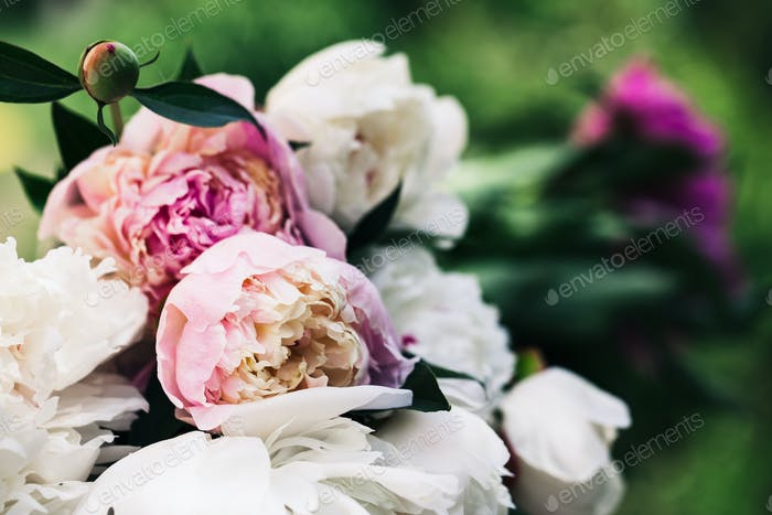 Floral background. Pink and white peonies pattern. Bouquet of peonies